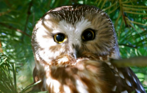 OWL Open House 2019 @ OWL Orphaned Wildlife Rehabilitation Society